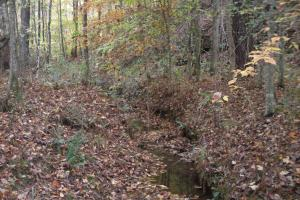 Blue Road Timber Tract (150 Acres) in Haralson, GA (17 of 20)