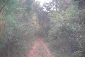 Blue Road Timber Tract (150 Acres) in Haralson, GA (5 of 20)