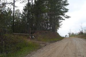 Blue Road Timber Tract (150 Acres) in Haralson, GA (2 of 20)