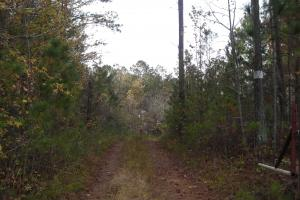 Blue Road Timber Tract (150 Acres) in Haralson, GA (3 of 20)