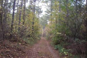 Blue Road Timber Tract (150 Acres) in Haralson, GA (8 of 20)