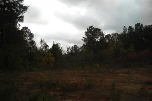 Blue Road Timber Tract (150 Acres) in Haralson, GA (7 of 20)