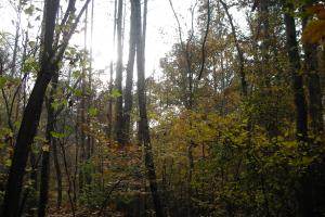 Blue Road Timber Tract (150 Acres) in Haralson, GA (11 of 20)