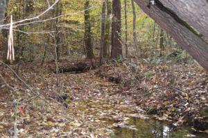 Blue Road Timber Tract (150 Acres) in Haralson, GA (12 of 20)