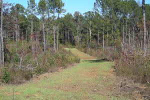 GA Hwy 100 Timber Tract (323 Acres) - Heard County GA