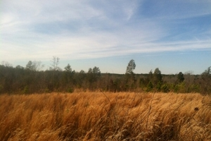 Hunting/Timber Investment Tract - Laurens County SC