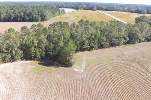 Roundabout Farming and Hunting Tract - Darlington County SC