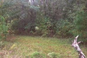 Hunting and Timber Acreage - Sumter County SC