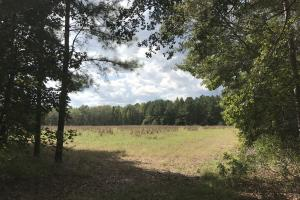 Nixville / Hampton Co. Hunting & Recreational  - Hampton County SC