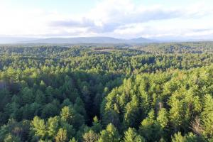 Johns River Road Hunting and Timber Tract   - Burke County NC