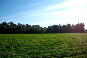 Country Homesite or Mini Farm - Horry County SC