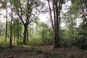 102 Acre Hunting / Timber Land - Calhoun County GA