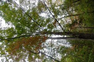 <p>Beautiful mature hardwoods found throughout&nbsp;the property.</p>