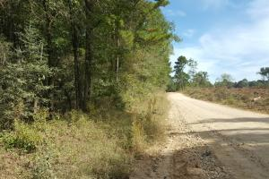 22 Acre Recreational and Hunting Property - Polk County TX
