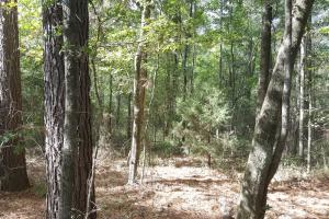 22 Acre Recreational and Hunting Property in Polk, TX (5 of 10)