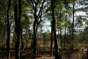 22 Acre Recreational and Hunting Property in Polk, TX (6 of 10)