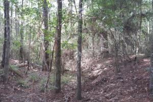 22 Acre Recreational and Hunting Property in Polk, TX (2 of 10)