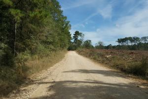 22 Acre Recreational and Hunting Property in Polk, TX (7 of 10)