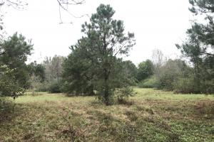 Falling Leaves Waterfront Hunting and Homesite - Sampson County NC