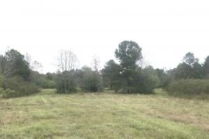 Falling Leaves Hunting and Hog Investment - Sampson County NC
