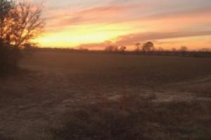 235 ACRES ON GLEATON ROAD, FARM AND RECREATION - Panola County MS