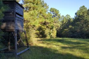 32 Acre Hunting and Recreational Getaway - Polk County TX
