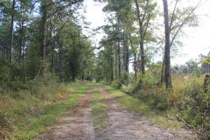 Pineville Recreation 100 Acres - Berkeley County SC