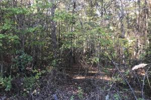 Sand Springs Road Timber and Hunting Investment - Fayette County AL