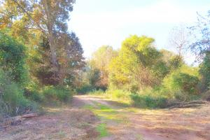 62.99 Acres, Hwy 51, Carnesville - Franklin County GA