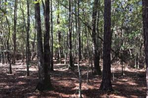 Springbank Timber and Recreation Tract - Washington County AL