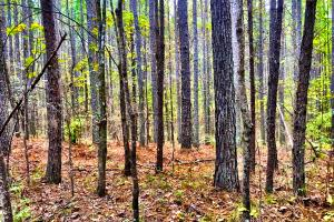 Timberline Hunting Tract - Shelby County AL