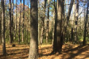 Red Bay Timber Investment & Home Sites - Franklin County AL