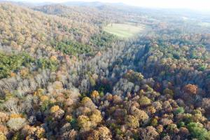 Hunting & Timber Investment - Caldwell County NC