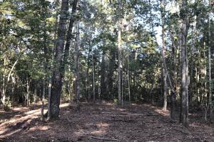 Bonneau Ridge Home Site  - Berkeley County SC