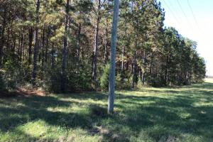 Old Town Tract - Conecuh County AL