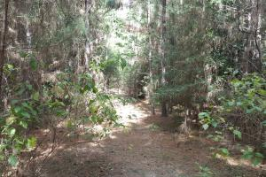 20 Acre Lake Livingston Recreational/Investment Tract in Polk, TX (10 of 16)
