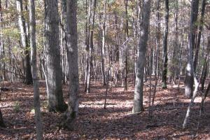 <p>Hardwood timbered hillside.</p>