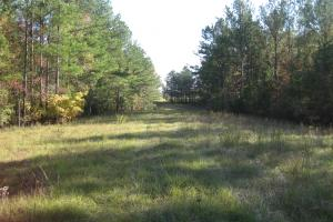 <p>View towards Martin Road, finger pasture. Great foodplot location.</p>