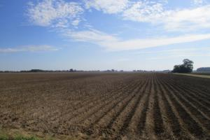 Prime Cotton and Soybean Farm - Tunica County MS
