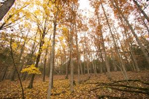 Nubbin Ridge Hunting and Homesite  - Gasconade County MO