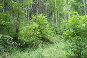 Hardwood Timber and Hunting Tract - Macon County NC