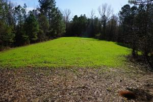 Old Millport Road Timber and Hunting Tract - Pickens County AL