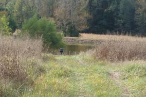 141 acre Hunting & Recreational Tract - Independence County AR
