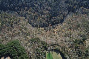 Little Yellow Creek Investment Opportunity - Tuscaloosa County AL