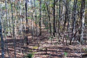 Harris County Hunting Property with Lake  in Harris, GA (13 of 27)