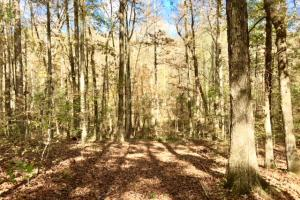 Harris County Hunting Property with Lake  in Harris, GA (15 of 27)