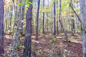 Harris County Hunting Property with Lake  in Harris, GA (9 of 27)