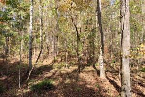 Harris County Hunting Property with Lake  in Harris, GA (18 of 27)