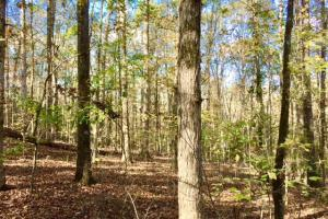 Harris County Hunting Property with Lake  in Harris, GA (20 of 27)