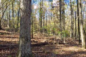 Harris County Hunting Property with Lake  in Harris, GA (21 of 27)